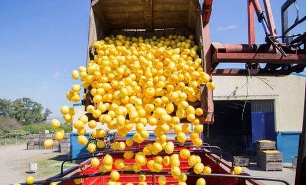 Argentina exportó el primer cargamento de limones a Brasil.