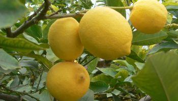 La citrícola San Miguel lanzó una oferta pública de acciones para expandirse