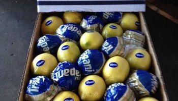 Productores de Tucumán le mandaron dos cajas de limones a Macri en agradecimiento por una medida