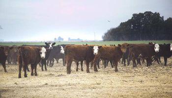 Nueva línea de créditos para productores ganaderos
