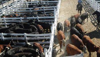 Liniers: vacas y toros mantuvieron un fuerte crecimiento de precios hacia el final de la semana