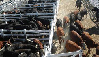 Liniers: la vaca de manufactura tuvo nuevas subas en una jornada con volumen reducido