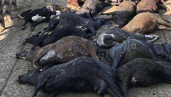 A raíz de la ola de calor, murieron 74 animales en el Mercado de Liniers