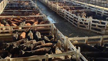 Caen los precios por menor venta en carnicerías