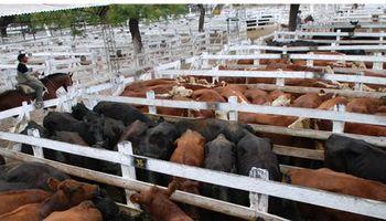 La vaca volvió a perder en Liniers