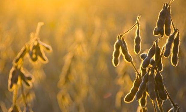 Liquidación masiva de contratos de soja y maíz