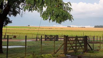 Las lluvias mejoraron la condición del agua para trigo en Buenos Aires