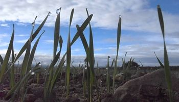 Clima: qué dice el pronóstico del tiempo para los próximos 7 días