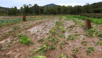 Lluvias se sienten en la región: miles de hectáreas se perdieron en Bolivia