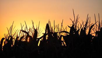 El clima para la cosecha: luego de las lluvias, ¿regresa el tiempo estable?