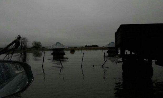 Drama en los campos. Foto: @Aculaciati