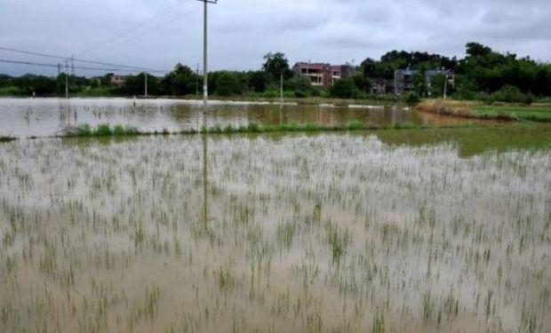 Existen unas 4 millones de hectáreas afectadas por la inundación.