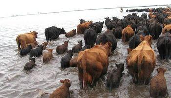 Productores obligados a vender animales por las inundaciones