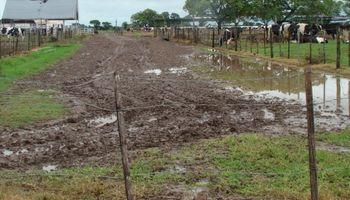 Inundaciones pusieron en jaque a la lechería