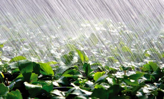 Lluvias: habrá fuertes diferencias en los acumulados pluviales de la región pampeana