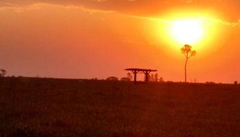 Contrastes regionales: falta de lluvias condiciona el arranque de la siembra en Brasil