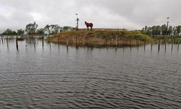 En el predio de la Sociedad Rural local los animales quedaron rodeados y atrapados por el agua. Foto: LA NACION / Diego Lima