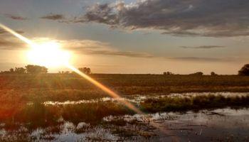Lluvias de marzo podrían inundar campos de soja y maíz