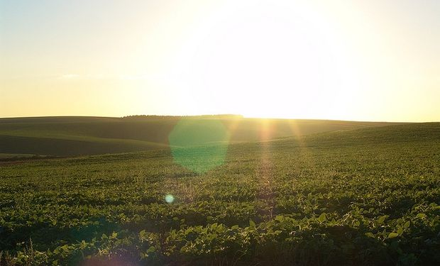 En la zona núcleo, la soja presenta por lo general buenas condiciones gracias a las abundantes precipitaciones que recibió a lo largo de la campaña.