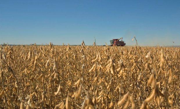 La cosecha quedó a la espera de mejores condiciones.