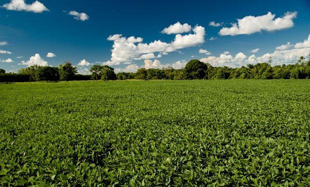 Aumentó un 37% la producción de granos en Córdoba