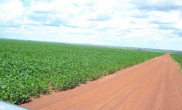 Brasil: Área de soja modera su crecimiento
