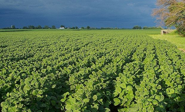 La soja avanza 0,5% a u$s 488,70