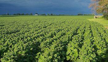 Las condiciones climáticas condicionan la evolución de la soja