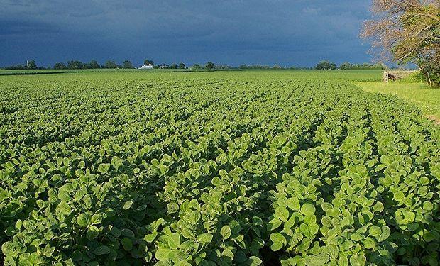 Crece expectativa por una mayor siembra de soja