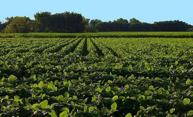 Clave para el campo: se define el tamaño de cosecha en EE.UU.