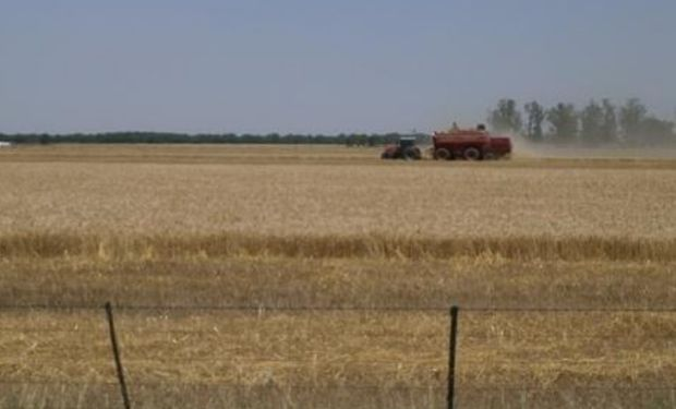 Lote de trigo, en pleno proceso de cosecha, en el centro oeste del departamento San Jerónimo.-