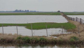 Inundaciones: se perdieron 60.000 hectáreas de trigo