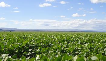 Terápicos para semilla con control combinado y amigables con el ambiente