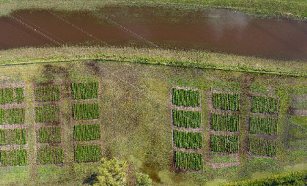 En los últimos dos años, los productores se vieron afectados por condiciones de sequía –en la campaña 2015/16- y por inundaciones en esta última.