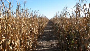 La Niña no afectaría los cultivos