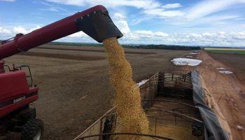 China comprará harina de soja de Rusia, mientras la Argentina espera la habilitación