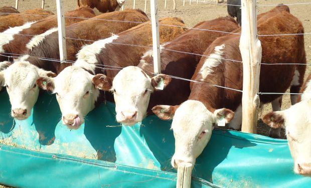 Desarrollar un mercado alternativo de alto potencial en un momento en que el país necesita producir más carne.
