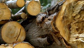 Buscan producir biohidrógeno a partir de residuos agrícolas