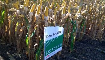Dow AgroSciences presentó 3 nuevos maíces híbridos con tecnología de punta