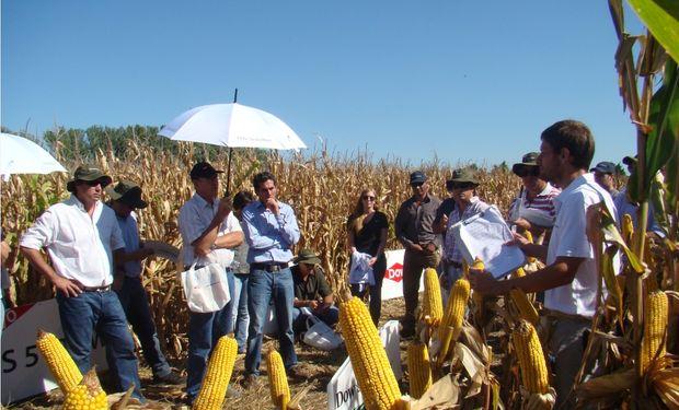 El marco de la presentación contó con la asistencia de productores, distribuidores y técnicos, que asistieron a la Jornada a Campo.