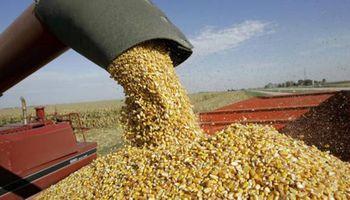 Exportaciones de maíz: el Gobierno estableció nuevas limitaciones