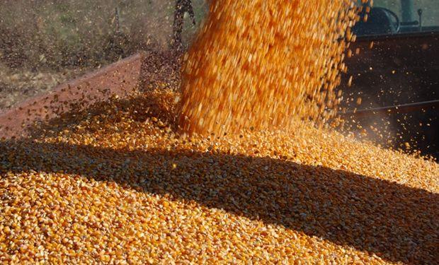 Operadores especulativos siguen profundizando apuestas bajistas en maíz