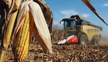 """El agro, """"único motor de la actividad económica durante el segundo trimestre"""""""