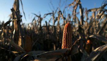Subas para soja y maíz luego del USDA: qué precios se pagaron en Rosario