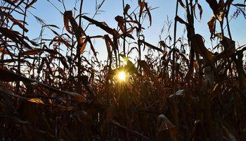 Soja, trigo y maíz se recuperan de la paliza bursatil del lunes