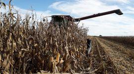 Santa Fe: la cosecha de maíz temprano avanzó un 70 % y el rendimiento obtuvo aumentos en lotes puntuales