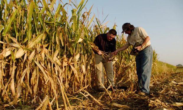 Fred Below: la recomendación de un experto para potenciar el rinde del maíz