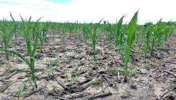 Coninagro exige acelerar los fondos a productores afectados por la seca