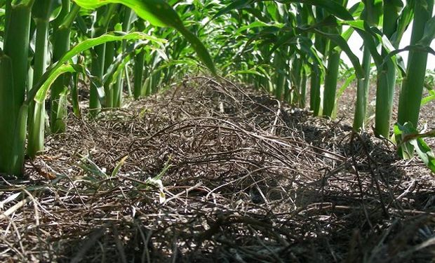 Siembra directa, rotación y ganadería son claves para aumentar la producción y mitigar la emisión de gases