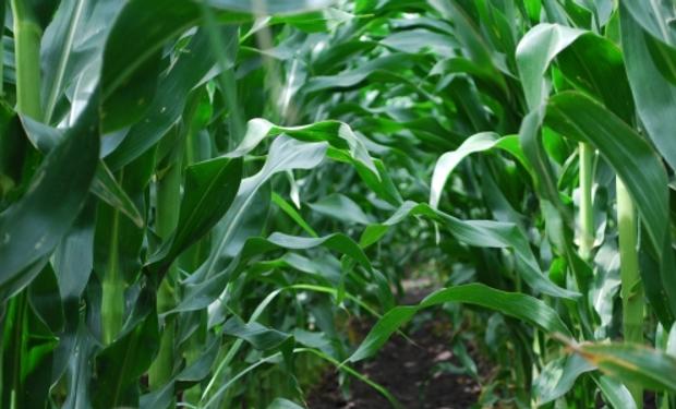 "La agricultura ""centrípeta"""